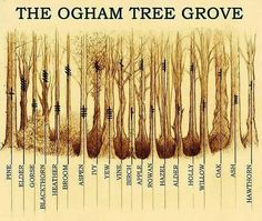 Ogham Trees, Celtic Druid, Ogham Runes, Druid Trees, Celtic Trees, Trees Ogham, Ogham Grove