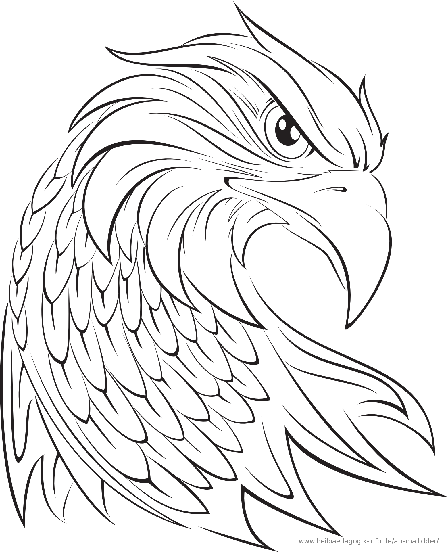 Adler Ausmalbild Celtic Knots Eagle Drawing Eagle