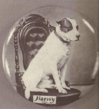 Harvey - Mascot of the 104th Ohio infantry