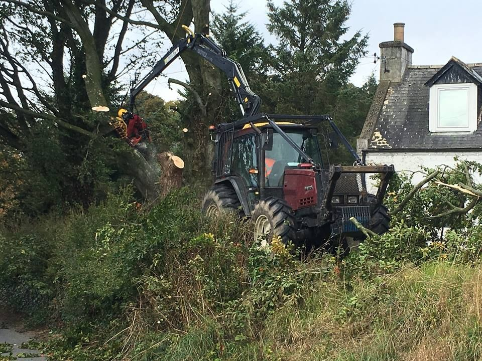 At work! A tree surgery job in Inverurie, Aberdeenshire.