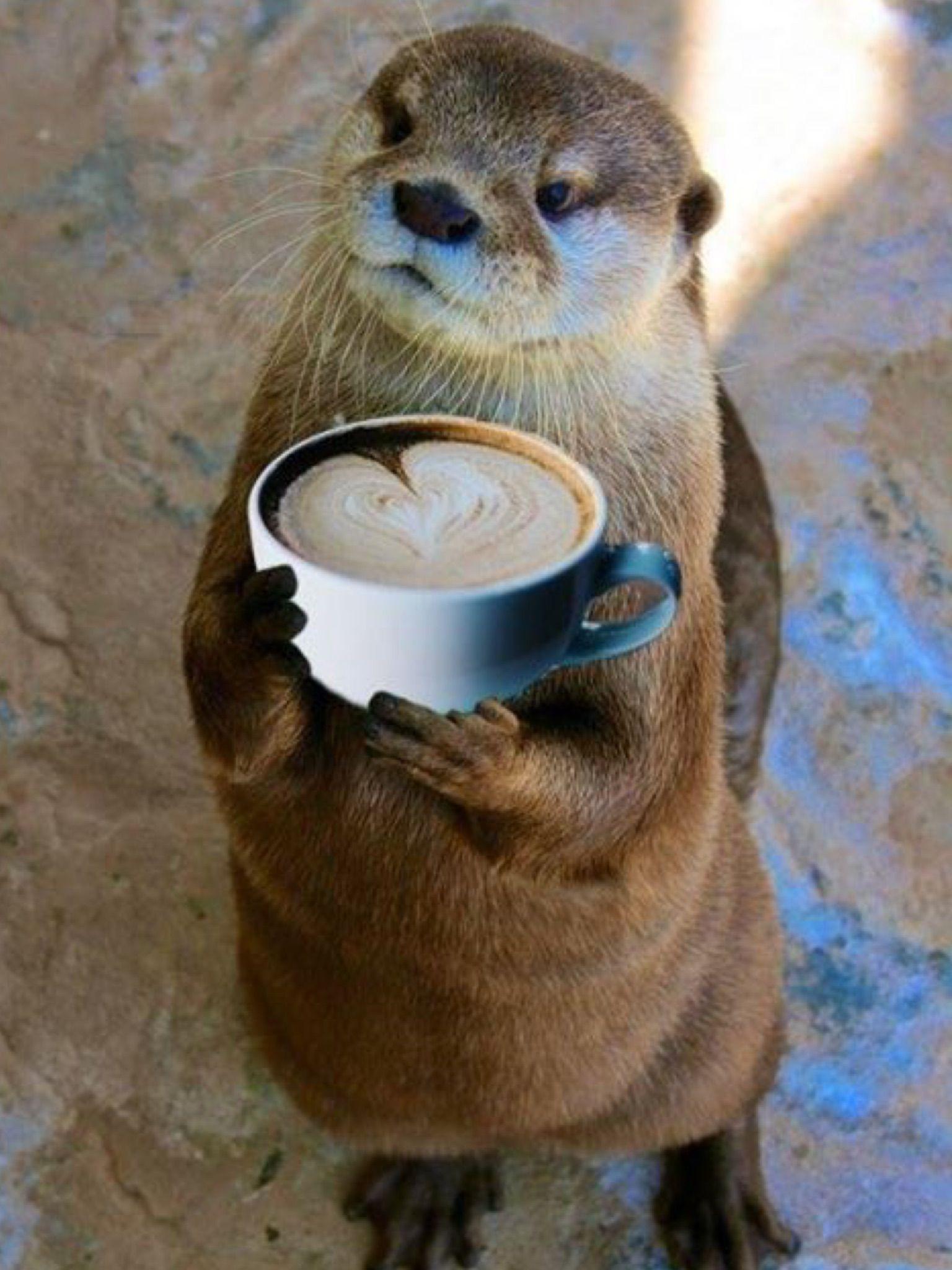 смешные фото животных с кофе культуре