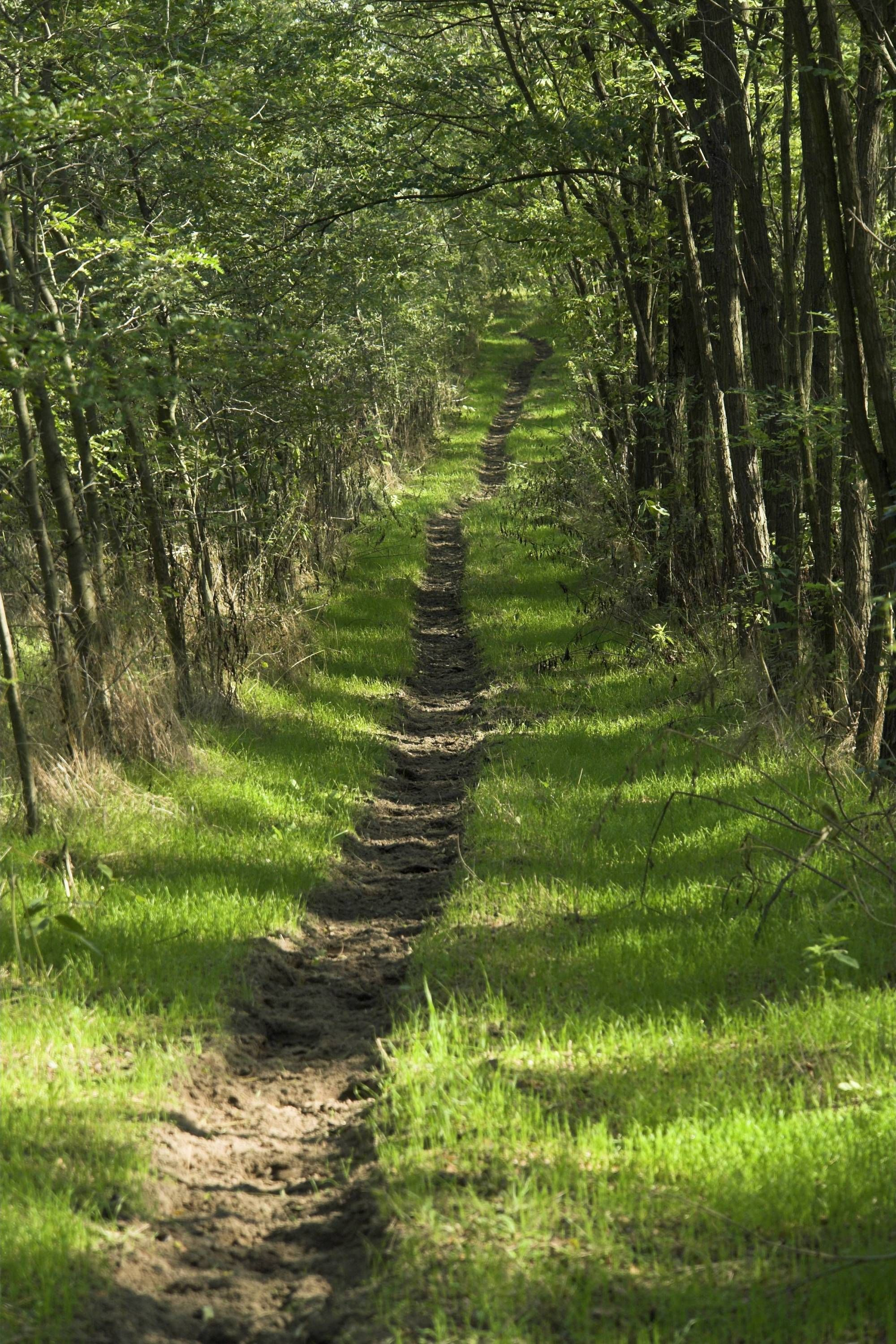 Peace Path A Road To Conflict Resolution