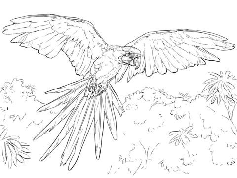 Blue And Yellow Macaw Coloring Page Bird Coloring Pages Super