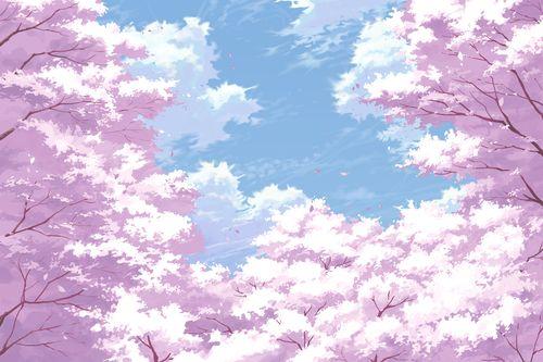 Sky Backgrounds Cherry Blossom Wallpaper Anime Cherry Blossom Anime Scenery Wallpaper