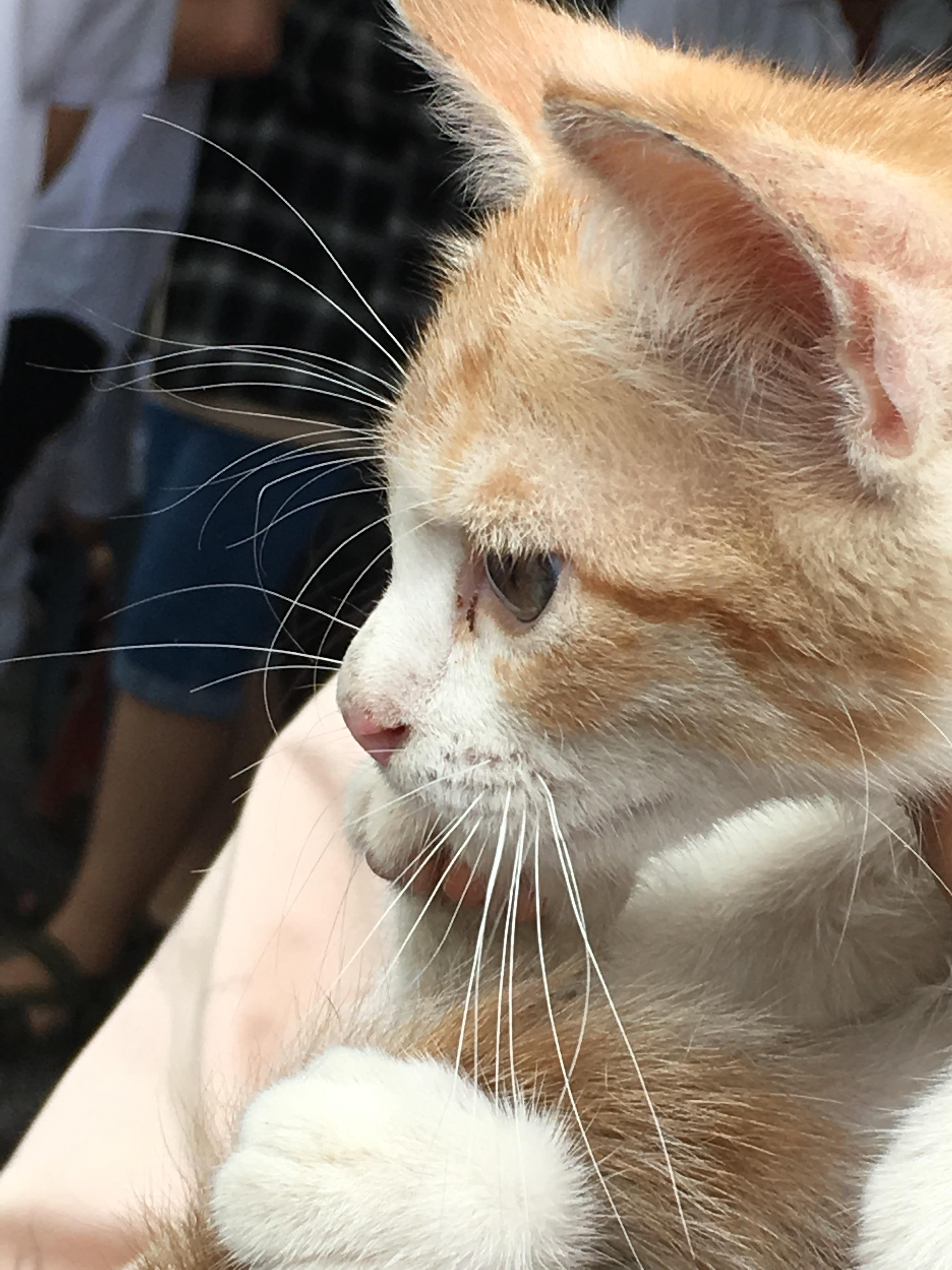 A very very cute kitten near my school 1010 would pet