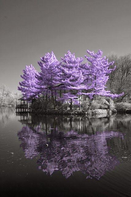 Incredible Pics Amazing Purple Heaven Nature Beautiful Tree Beautiful Nature