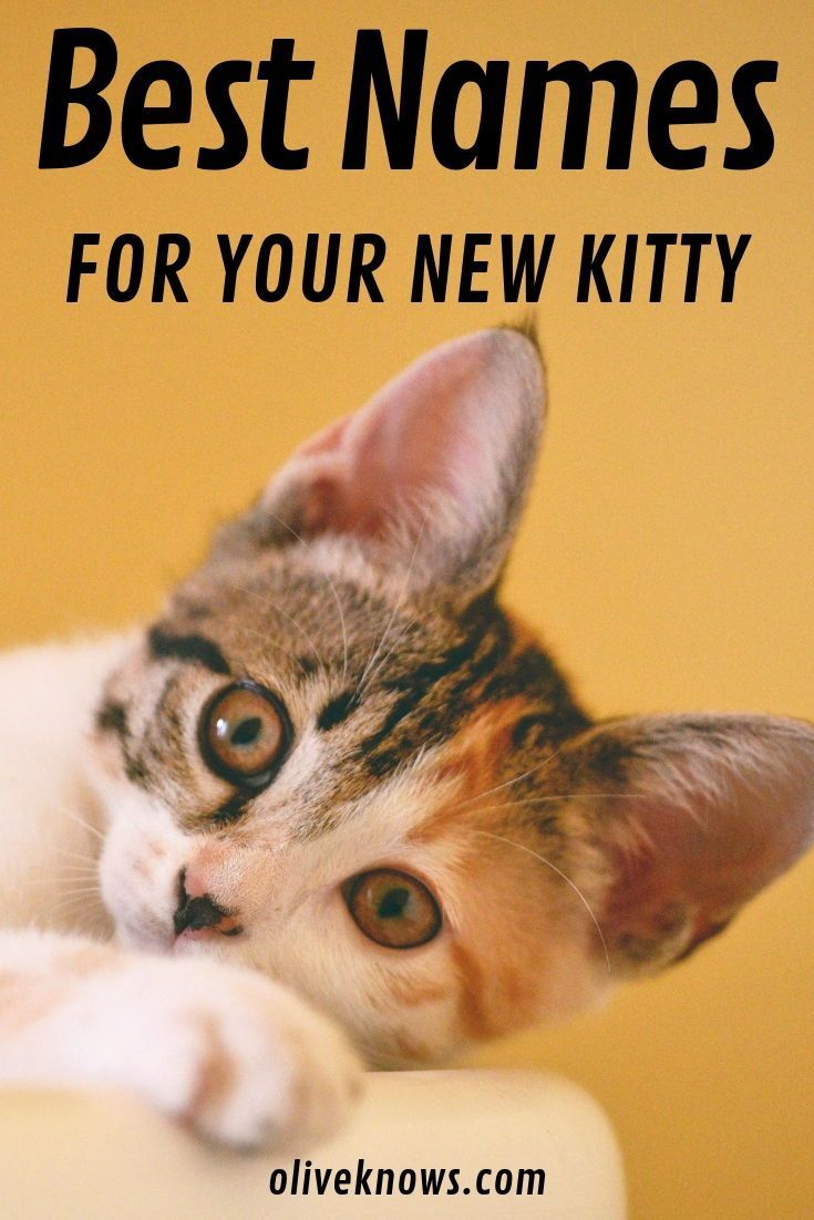 The Best Cat Names for Your New Kitty Cat diseases, Cute