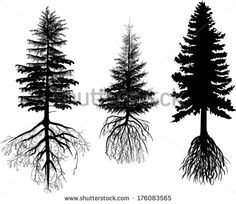 Pine Tree Silhouette Roots Stock Photos Images Pictures Pine Tree Tattoo Tree Tattoo Arm Pine Tree Silhouette