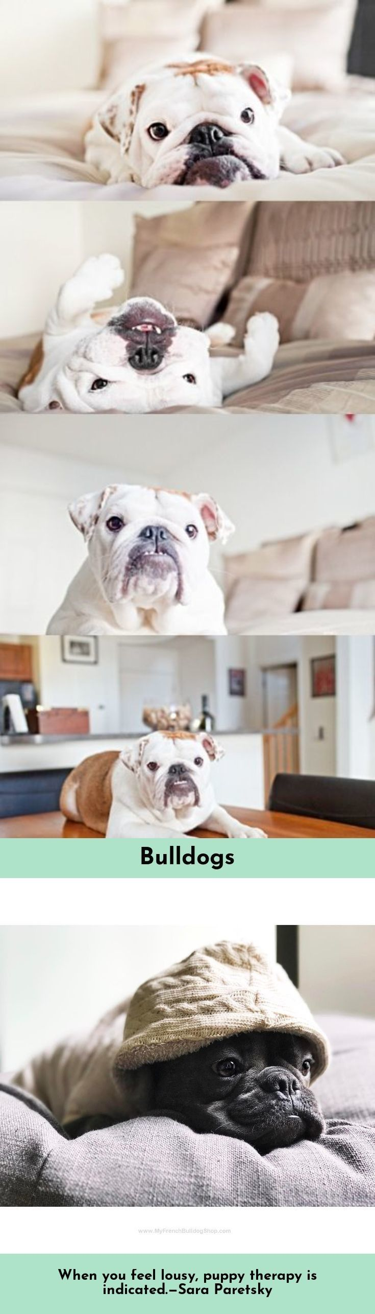 Read Information On Bulldogs Simply Click Here To Learn More Baby Dogs Cute Animals Bulldog
