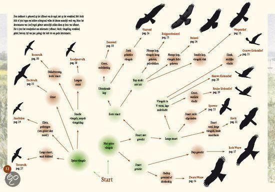 Betere roofvogels herkennen - Google zoeken | Roofvogels, Vogels, Vogel LT-59
