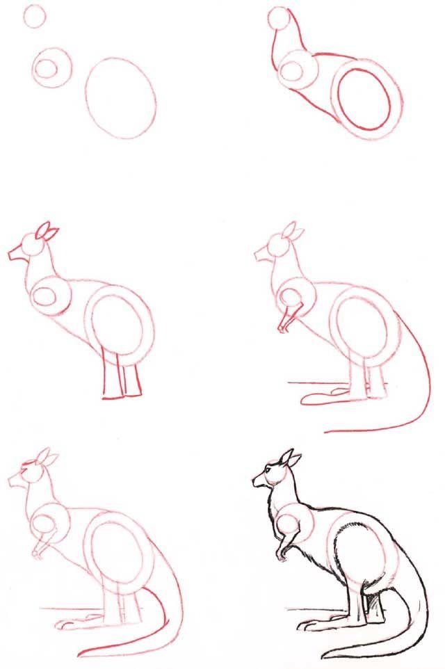Learn to draw: Kangaroo
