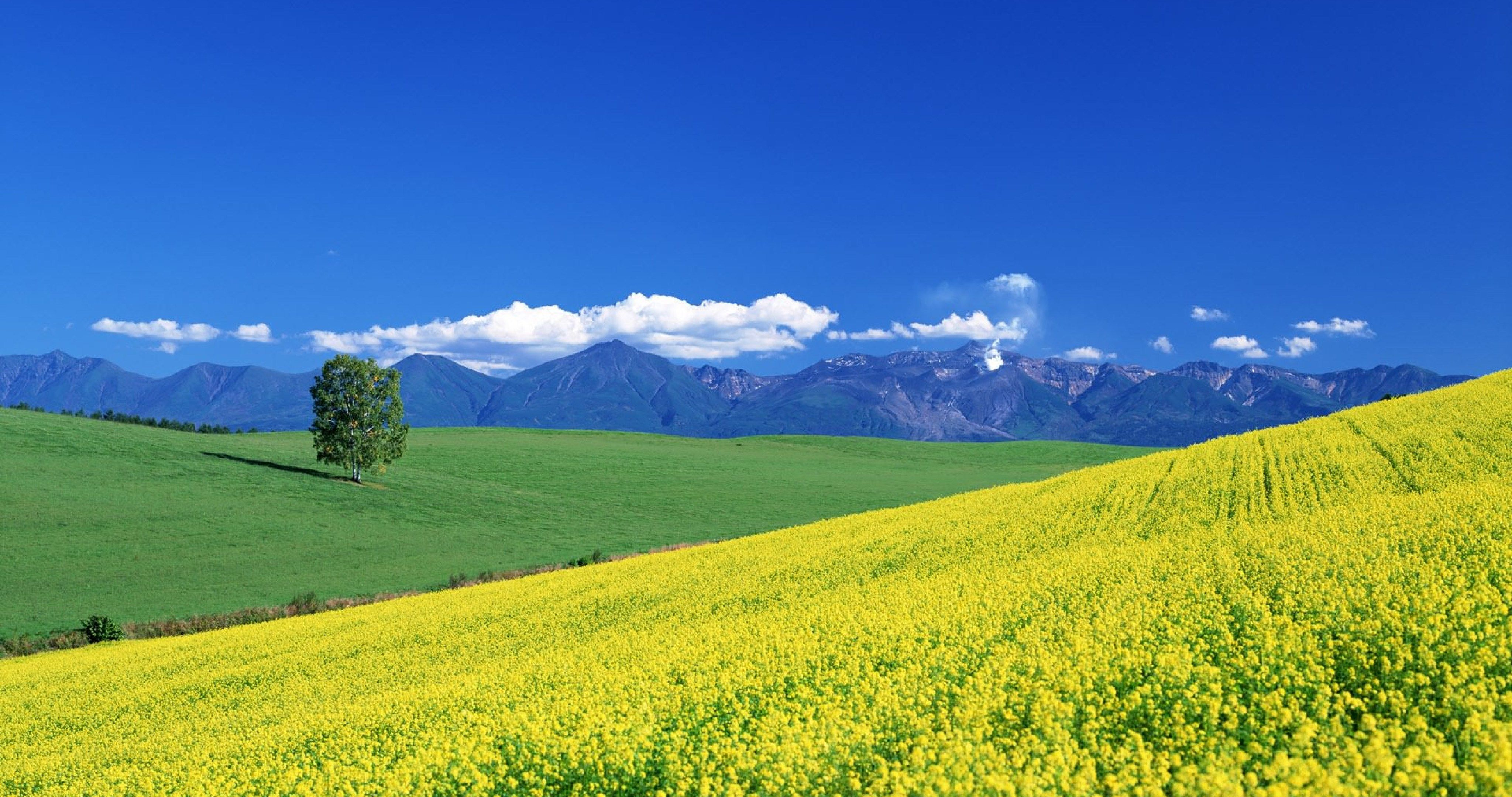 Colorful Valley 4k Ultra Hd Wallpaper Summer Trees Sky Mountain