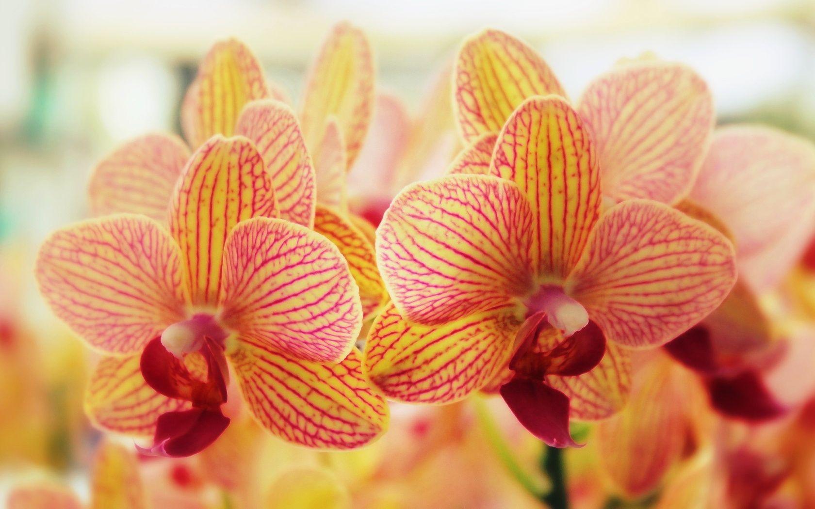 Wallpaper download on zedge - Flowers Wallpapers Free Download Zedge Best Hd Wallpapers