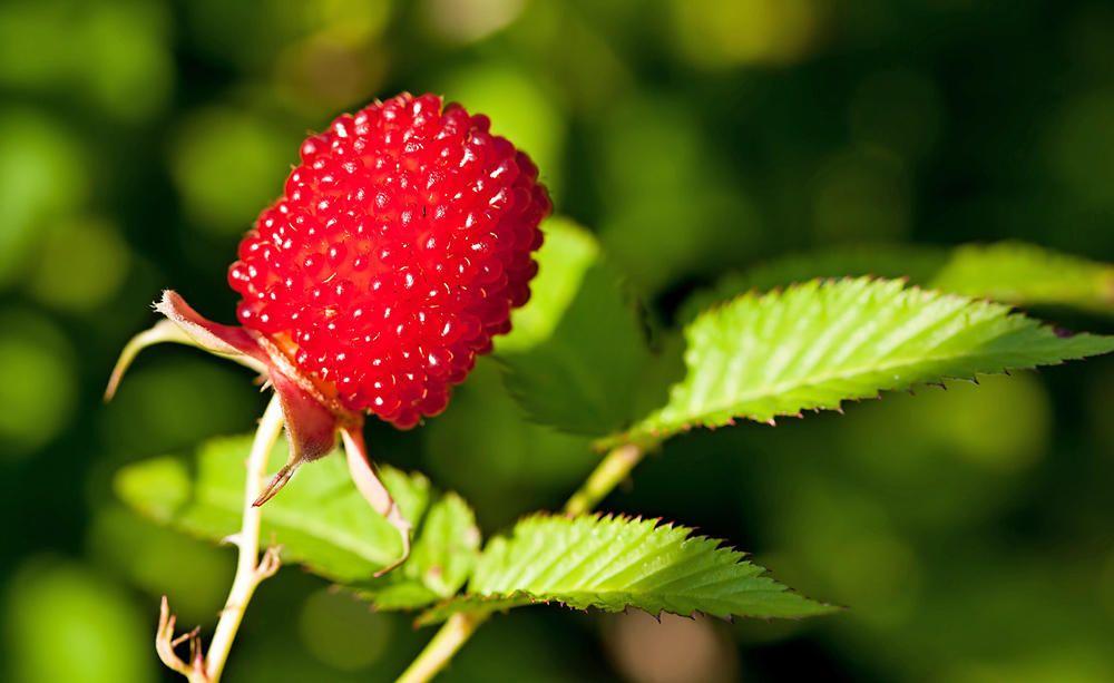 neu entdeckt die erdbeer himbeere obstgarten pinterest garten obstgarten und obst. Black Bedroom Furniture Sets. Home Design Ideas