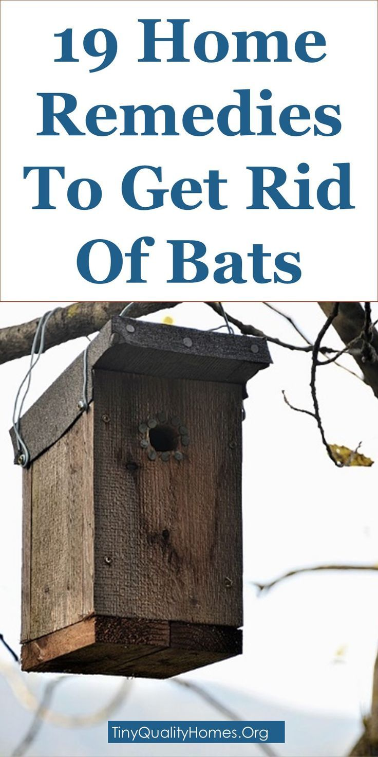 how to get rid of a bat in your house