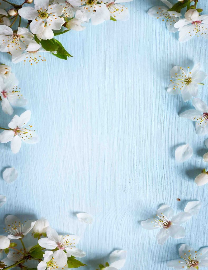 White Pear Flower Sprinkle Around Sky Blue Wood Photography