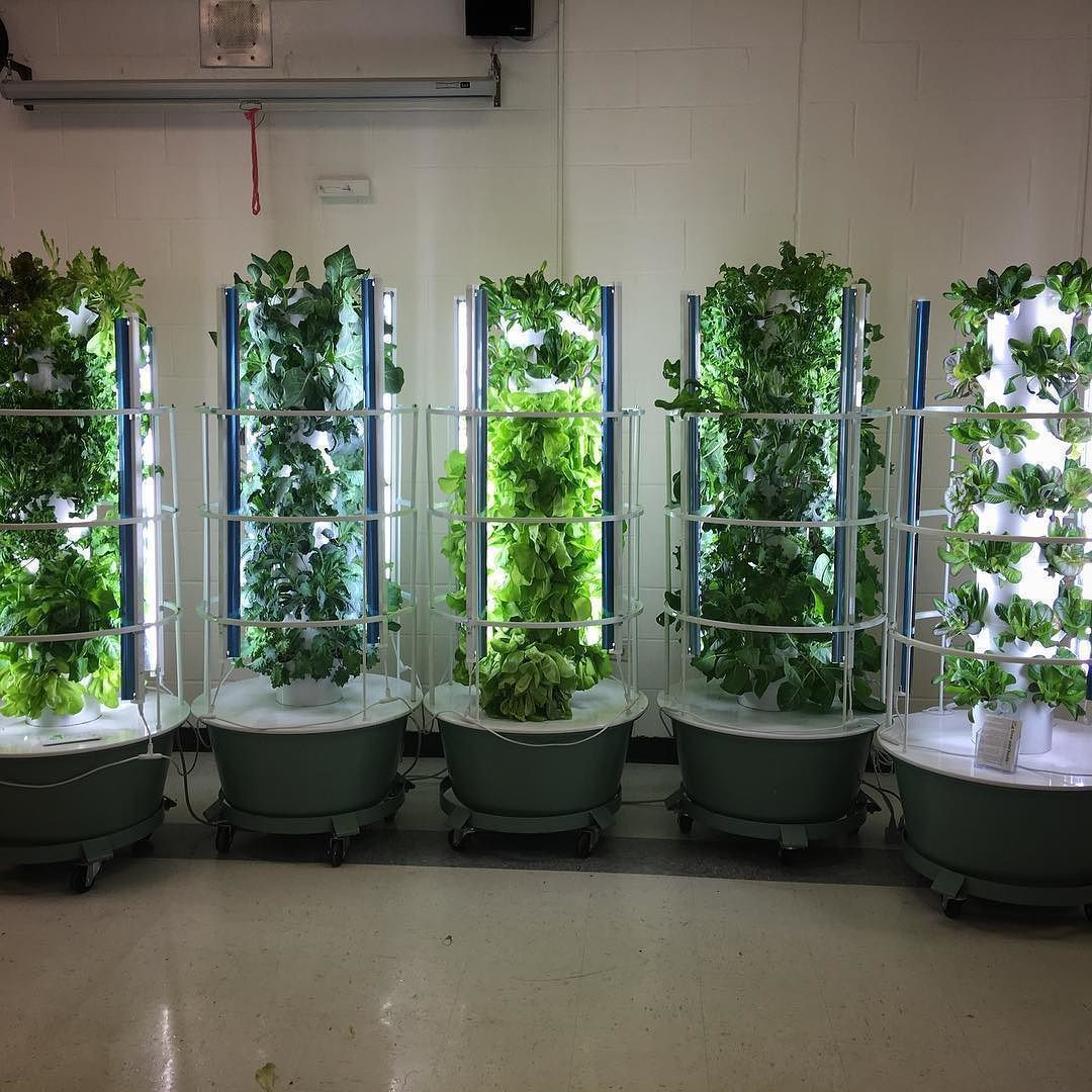 Grow Your Own Fruits Vegetables Indoors Or Out These Towers Are 5 Weeks From Seed To Full Grown Plant Kale A Few Lettuce Varieties Swiss Chard Mustard