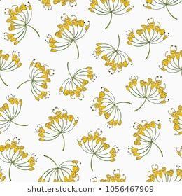 Seamless pattern with dill flowers or inflorescences hand drawn on white background backdrop plant cultivated for culinary use elegant vector also rh pinterest