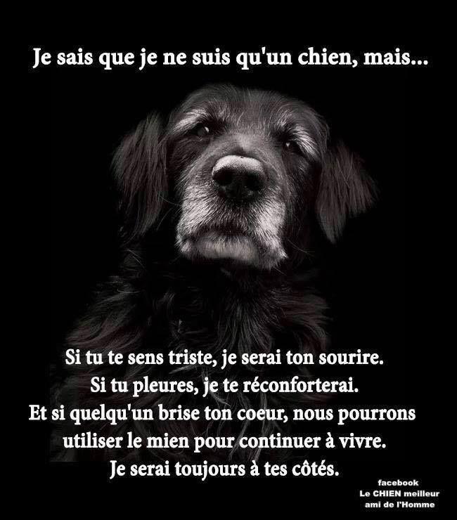 Amour chien et homme phrases [PUNIQRANDLINE-(au-dating-names.txt) 45