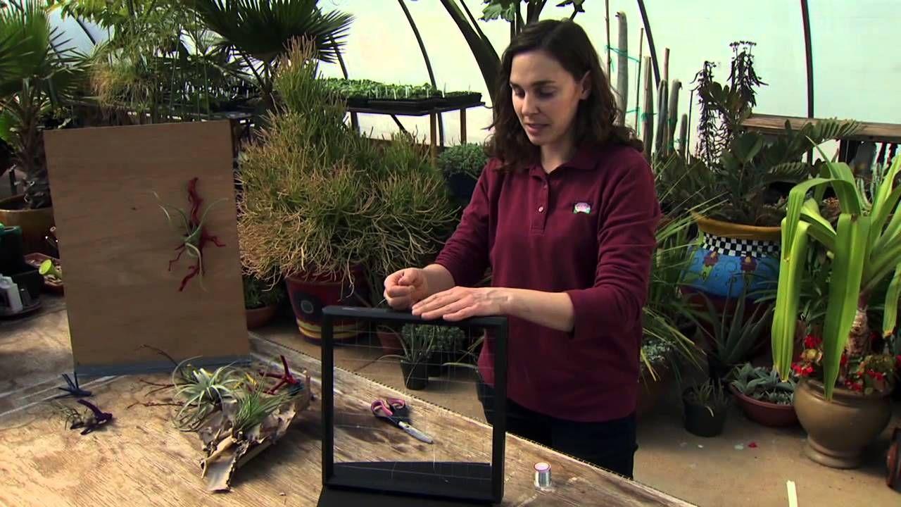Oklahoma Gardening Host Kim Toscano Demonstrates How To Mount