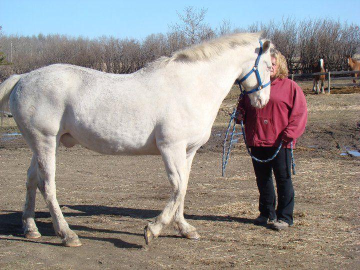 Whitey Jonez (Post Op) ~1st day back home after eye surgery ~  High Roller Farms 2011