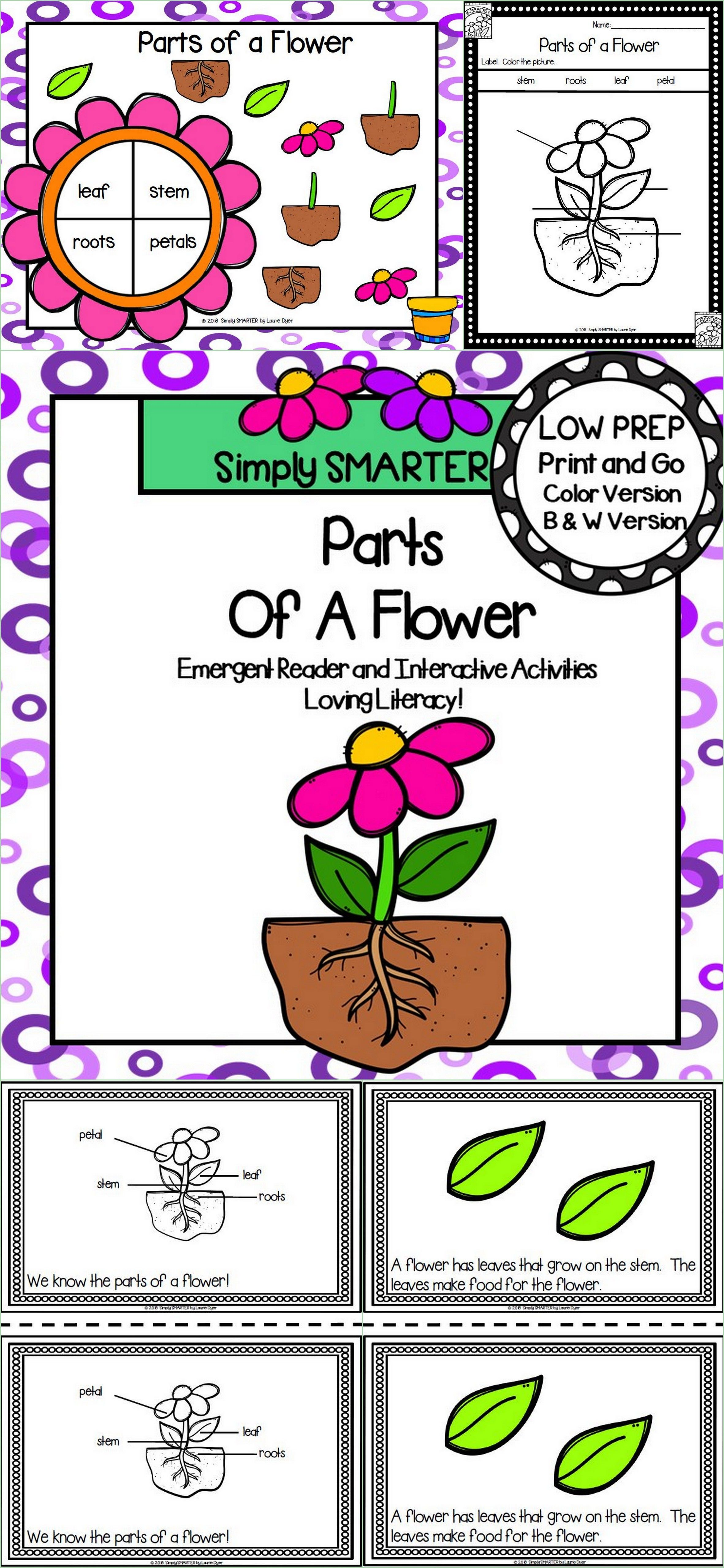 Parts Of A Flower Emergent Reader Book And Interactive