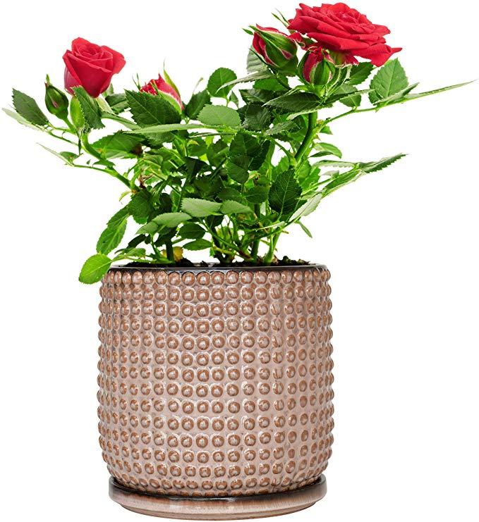 Amazon Com Beaded Stoneware Pot With Drainage Hole And Tray Light Brown Ceramic Plant Pot 6 Inch Round Pl In 2020 Ceramic Plant Pots Planter Pots Watercolor Plants