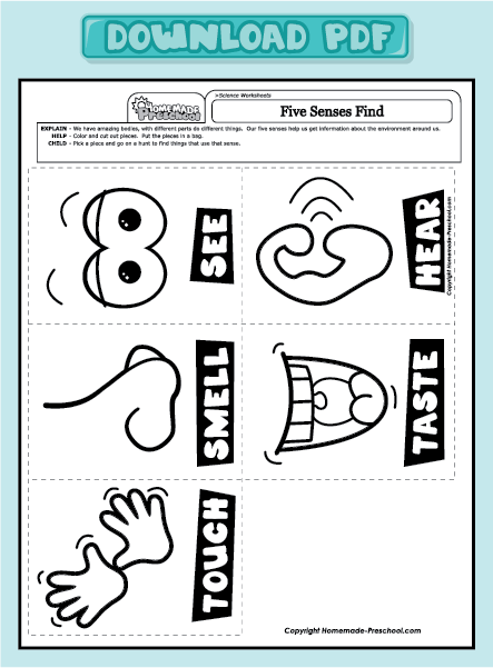Common Worksheets » Worksheet On Five Senses - Preschool and ...