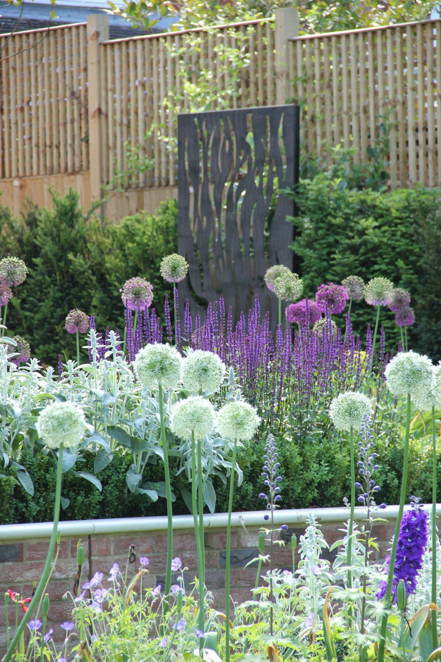 Alliums. Garden Design and planting design in Harpenden ...