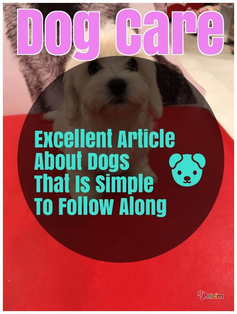 Dog Related Questions Let Us Answer Them For You Dogs Lover
