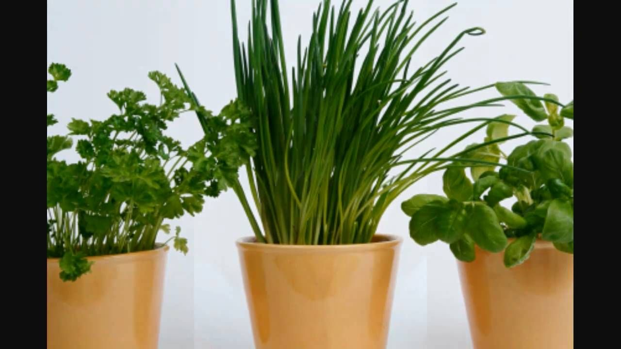 http://www.meganmedicalpt.com/ Growing Herbs for Beginners -Module 1 History of Herbs