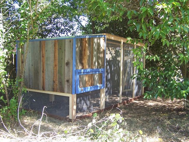 Coop & Covered Run with Blue Trim   PaulsRarePoultry