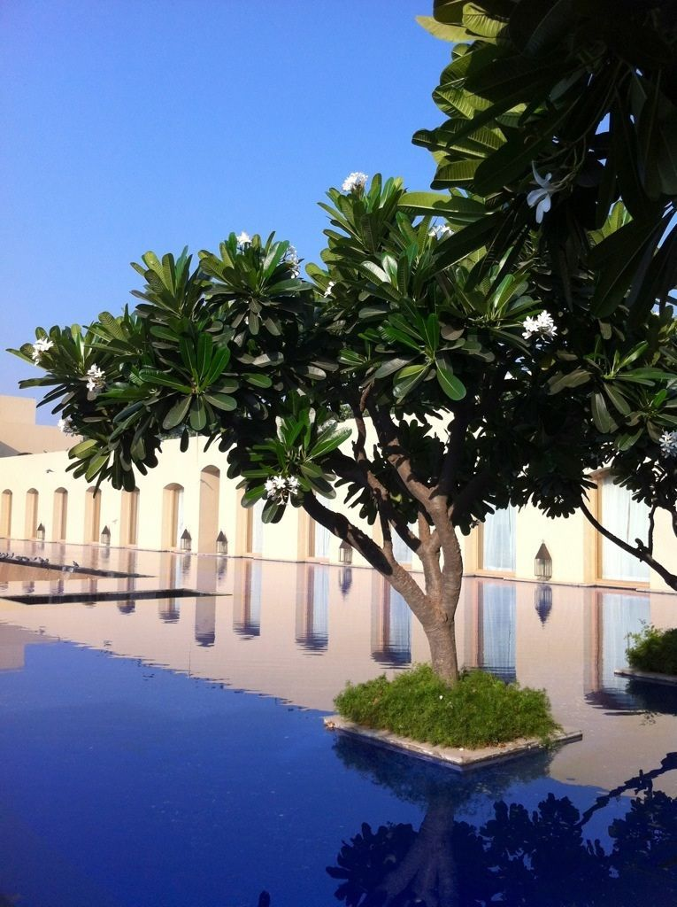 The Trident, Gurgaon, India The Frustrated Gardener