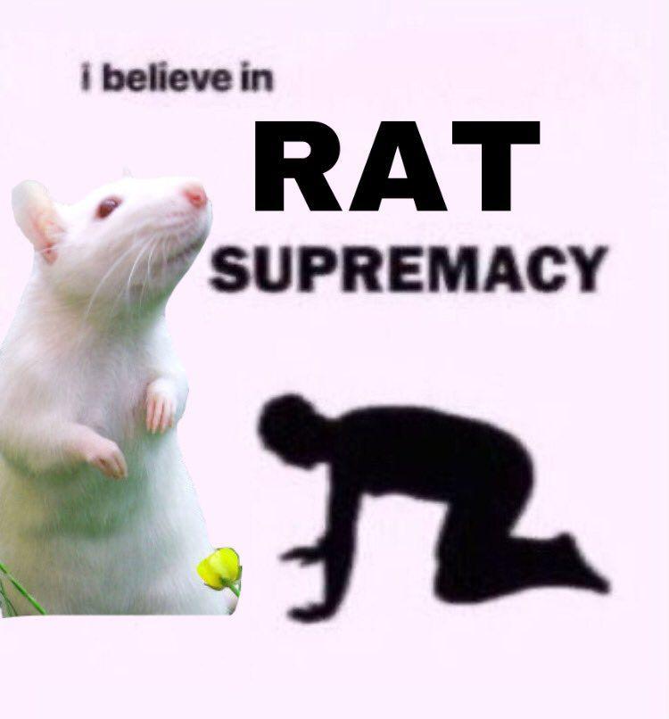 Rat Logic Timeline Photos Facebook Baby Rats Cute Rats Pet Rats