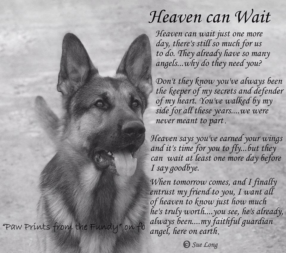 You Ll Meet Me In The Light Dog Poems Pet Remembrance Pet Grief