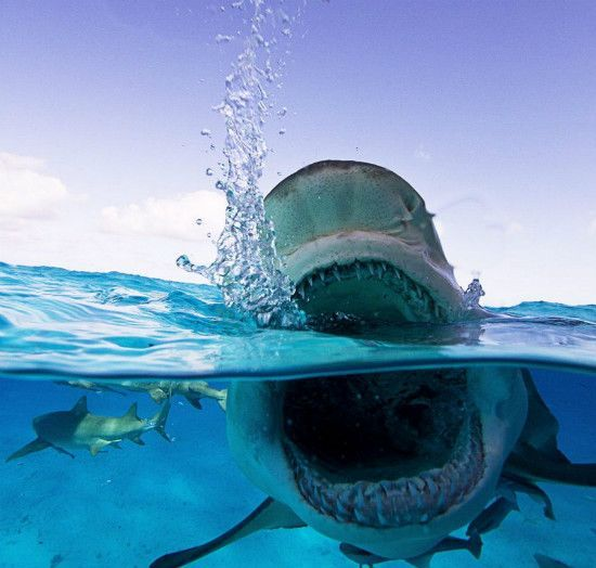 A Mexican photographer captures the moment of tiger shark hunting