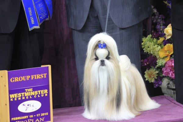 Westminster Winners Night One Westminster Dog Show Dog Show