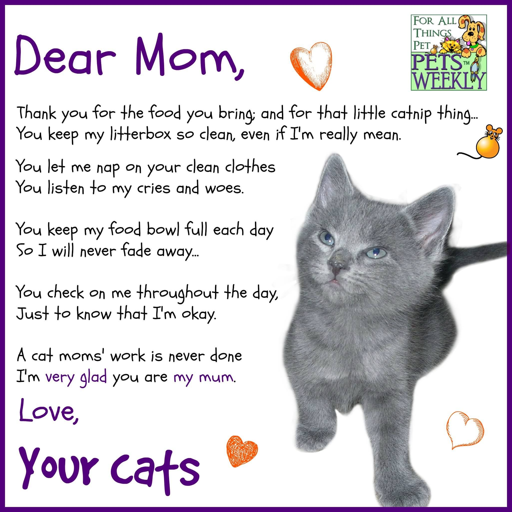 Happy Mother S Day Cat Poems Crazy Cats Cats