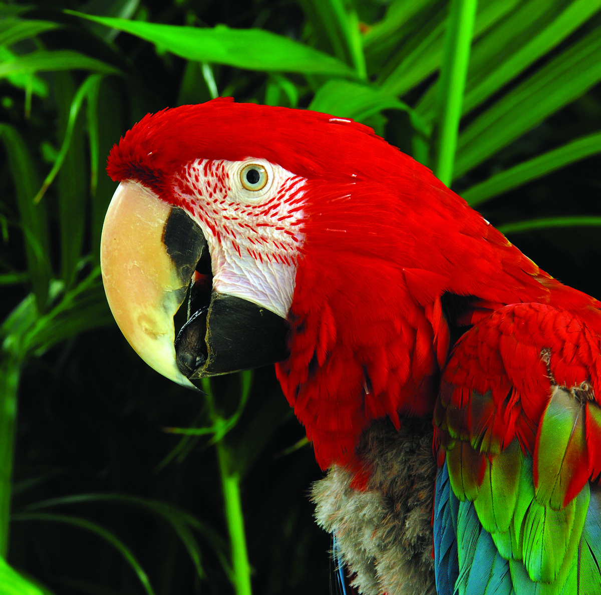 Top 10 facts about the Amazon Rainforest The Inside