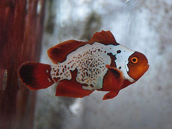 Dsc 0112 600w Fish Drawings Weird Fish Beautiful Fish