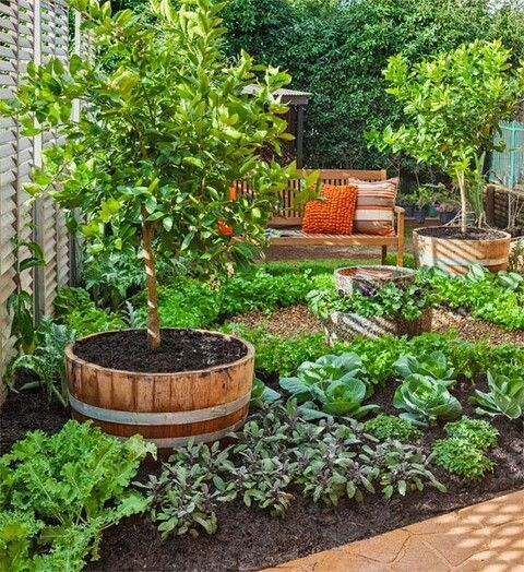 Back Yard Potager: Interesting Potager Design