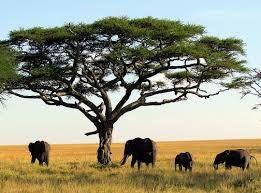 Bildergebnis für serengeti nationalpark