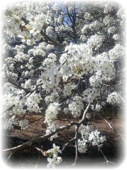 Spring in bloom.