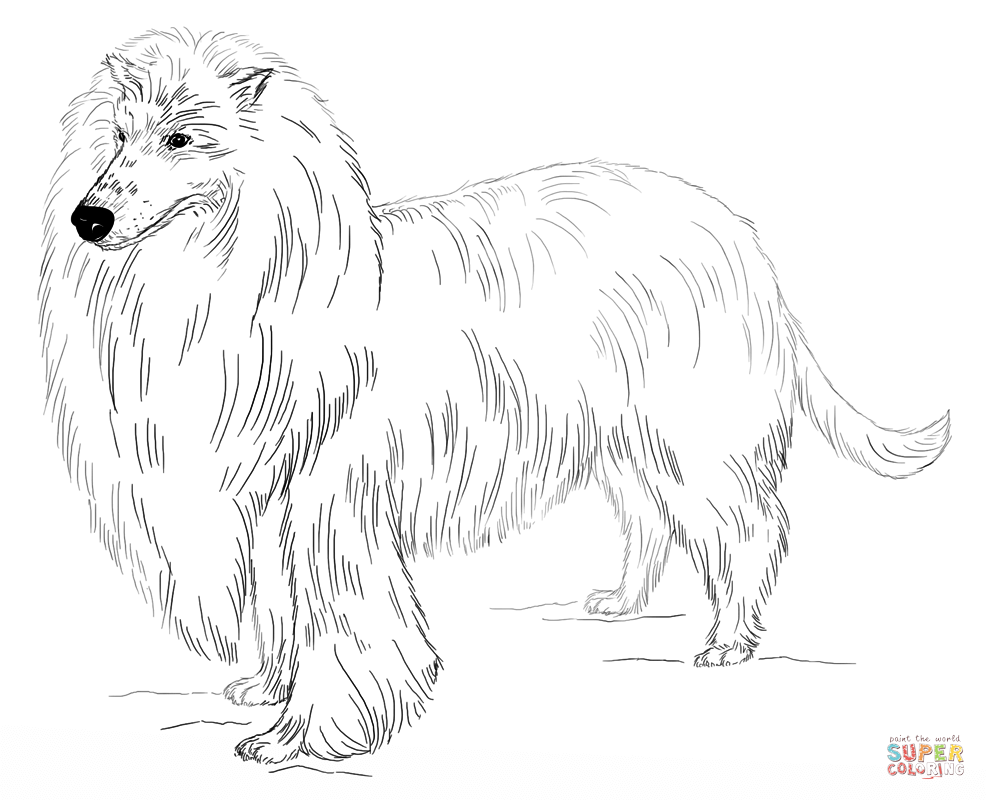 Long Haired Collie Dog Drawing Tutorial Dog Coloring Page Coloring Pages