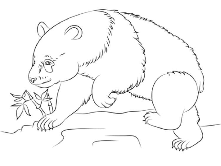 Giant Panda Coloring Pages Free Di 2020