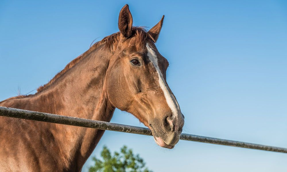 How Much Does a Horse Cost in 2020 Horses, Equine care