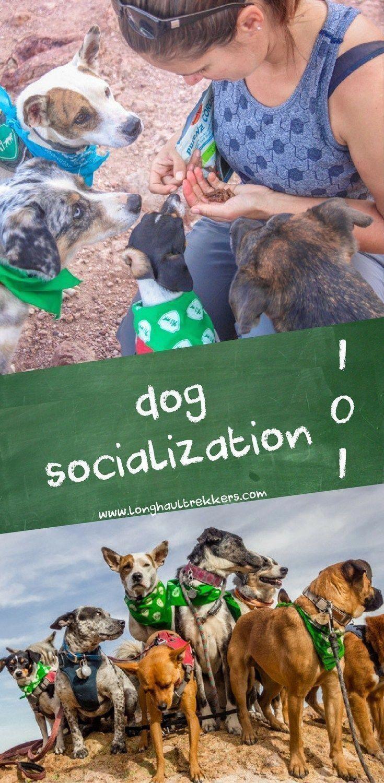 How to master dog training socializing dogs dog