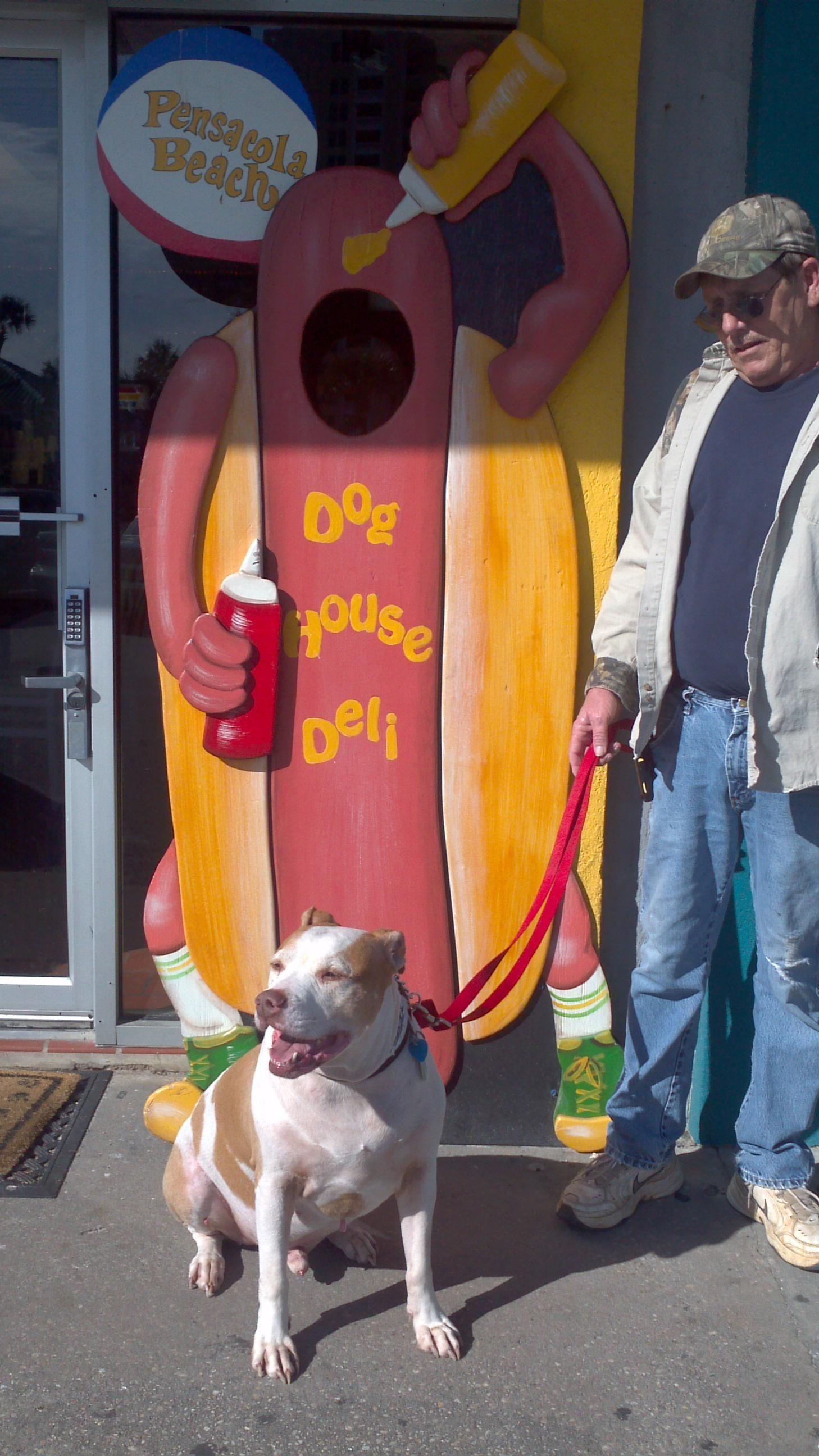 Dog House Deli Pensacola Beach Trip Advisor Dogs