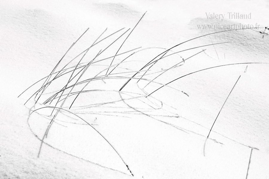 Herbes sur la #neige #snow #noiretblanc #blackandwhite