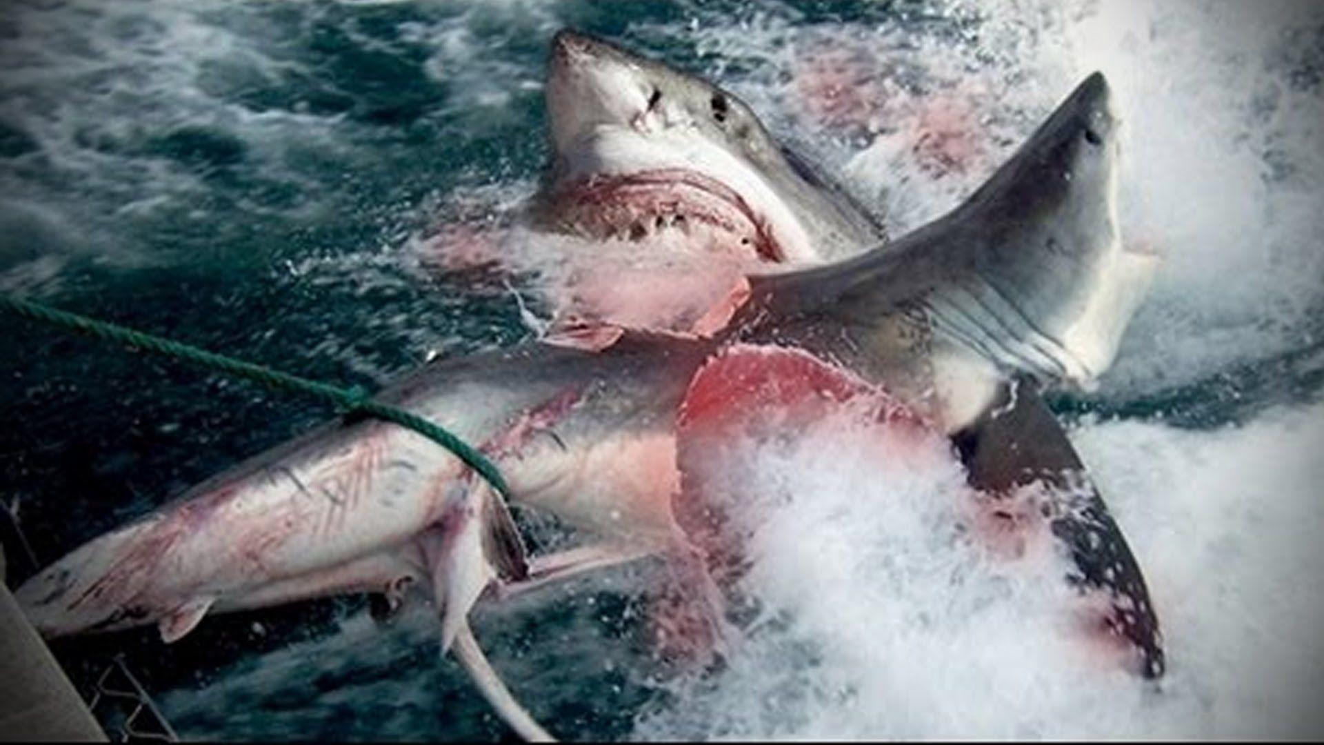 Megalodon Shark Caught on Tape, UFO and Alien Sightings ...